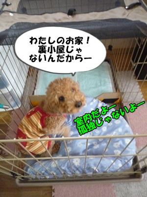 ナナちゃんP1170397