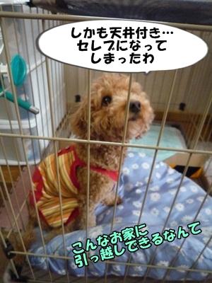 ナナちゃんP1170400