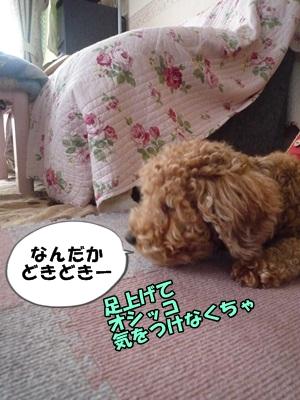 ナナちゃんP1170406