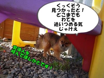 たぬきP1160716