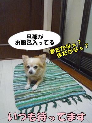 ちくわP1170622