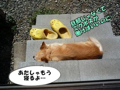 ちくわP1170589
