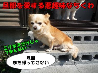 ちくわP1170521