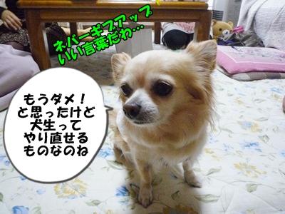 ちくわP1170804