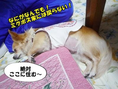 ちくわP1170795