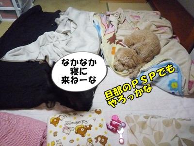 だぱんぷP1170850