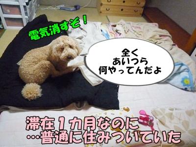 だぱんぷP1170851