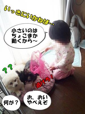犬取り遊びP1170858