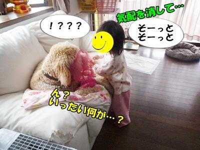 犬取り遊びP1170855