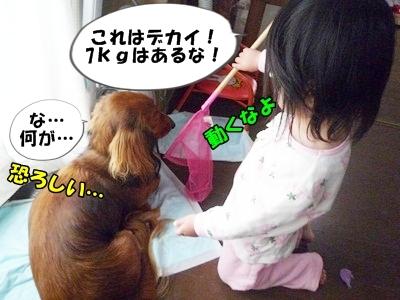 犬取り遊びP1170857