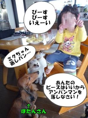 犬とおやつとミクとP1180118