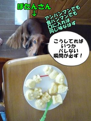 犬とおやつとミクとP1180115