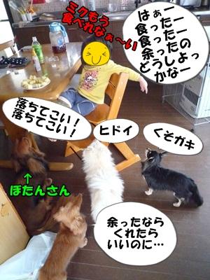 犬とおやつとミクとP1180123