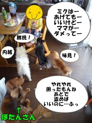 犬とおやつとミクとP1180110