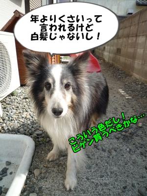 のんとデル男P1180348
