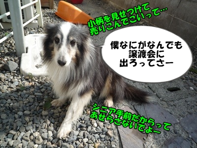 のんとデル男P1180336