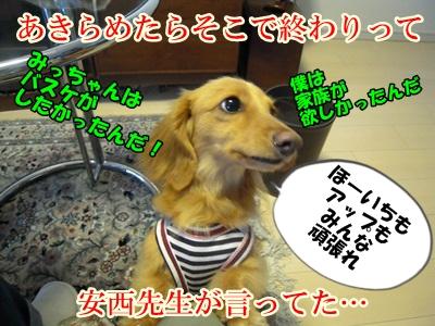 デル男DSCN9395