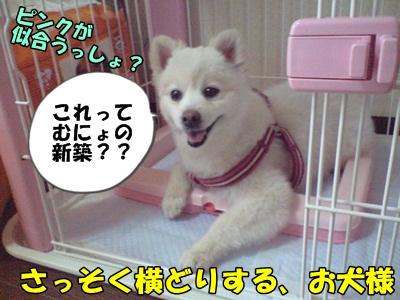 るるん♪CA3A1028