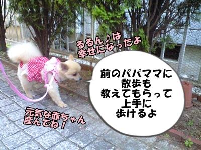 るるん♪CA3A1048