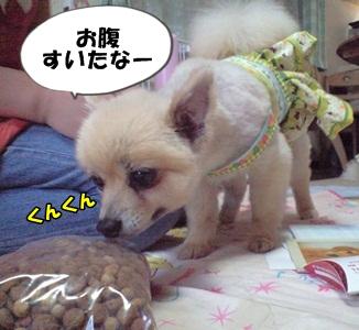 るるん♪CA3A1070