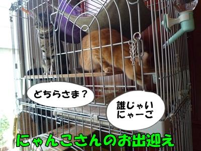 ギャルお見合いP1200344