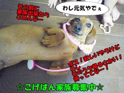 こげぱんP1200557