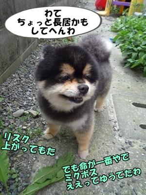 ぽん太P1200887