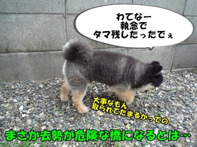 ぽん太P1200866