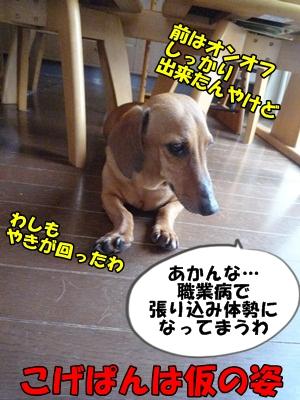 こげP1200833