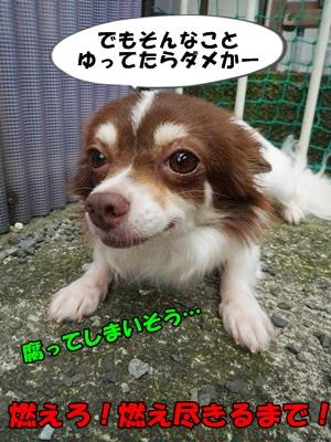 くろP1200881