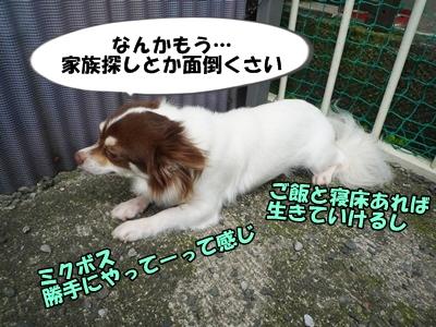 くろP1200879