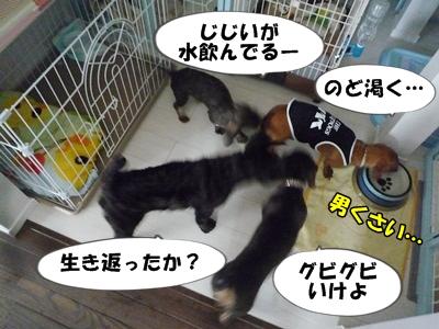 ちゃっぷP1210420