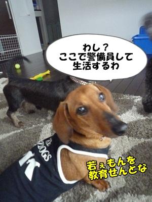 ちゃっぷP1210454