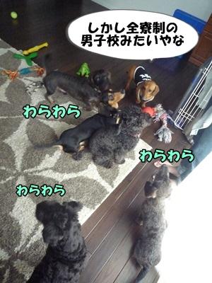 ちゃっぷP1210449