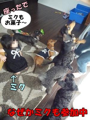 ちゃっぷP1210456