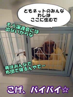 ちゃっぷP1210486