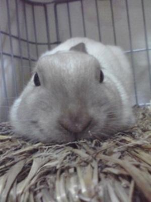 ob変顔好きな同居ウサギ
