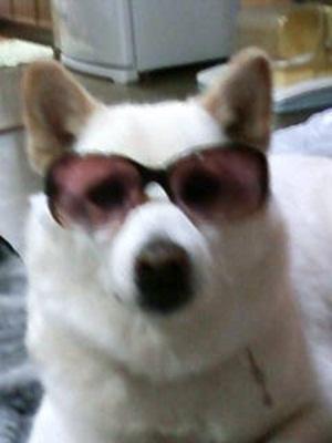 犬100601_215909