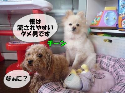 パピコちゃんP1060985