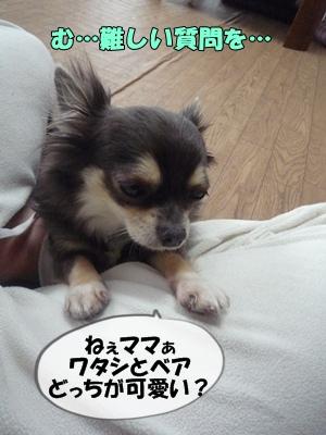 パピコちゃんP1060884