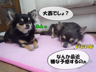 パピコちゃんP1060748