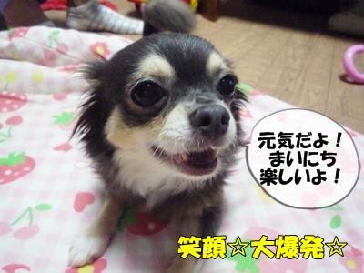 パピコちゃんP1060389