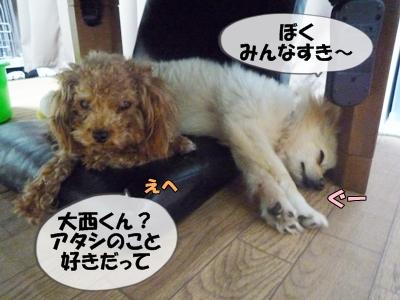 パピコちゃんP1070048
