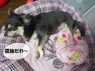 パピコちゃんP1070045