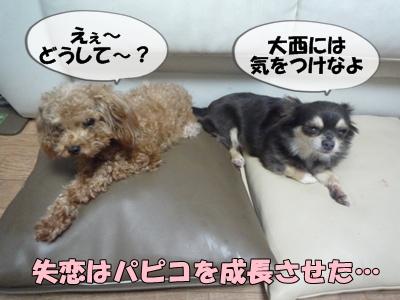 パピコちゃんP1070042