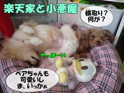 パピコちゃんP1070025