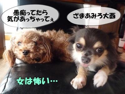 パピコちゃんP1070051