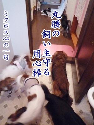 トイレ前P1230291