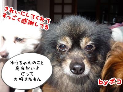 ゆうちゃんP1150677