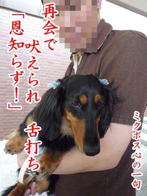 川柳P1190370